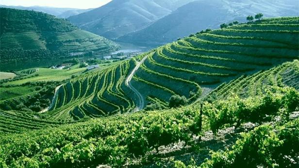 Vinice v údolí řeky Douro