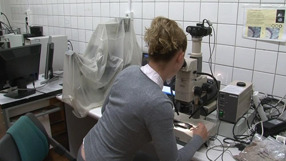 Vědci z Mendelovy univerzity v Brně vyšlechtili modrou pšenici