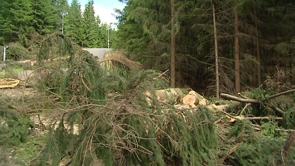 Polámané stromy v Novém Městě na Moravě