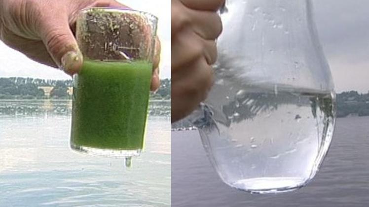 Srovnání čisté vody a vody znečištěné sinicemi