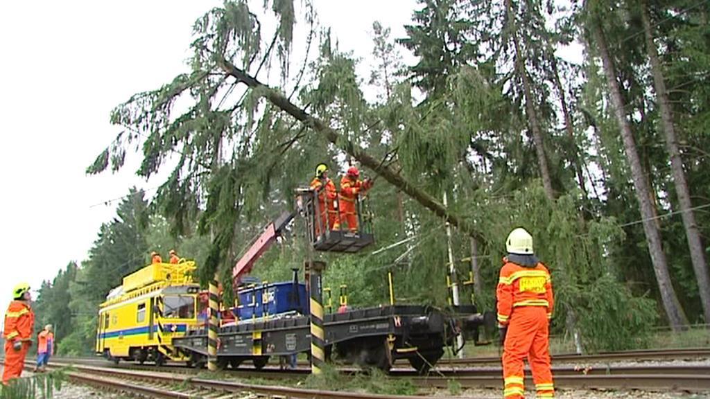 Strom na trati