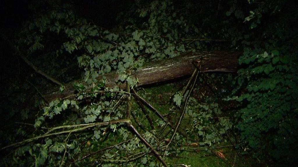 Polámané stromy na Karlovarsku