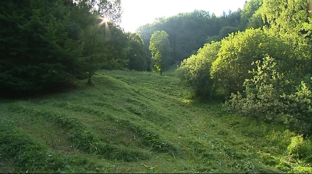 Pokosenou trávu si vezmou místní zemědělci
