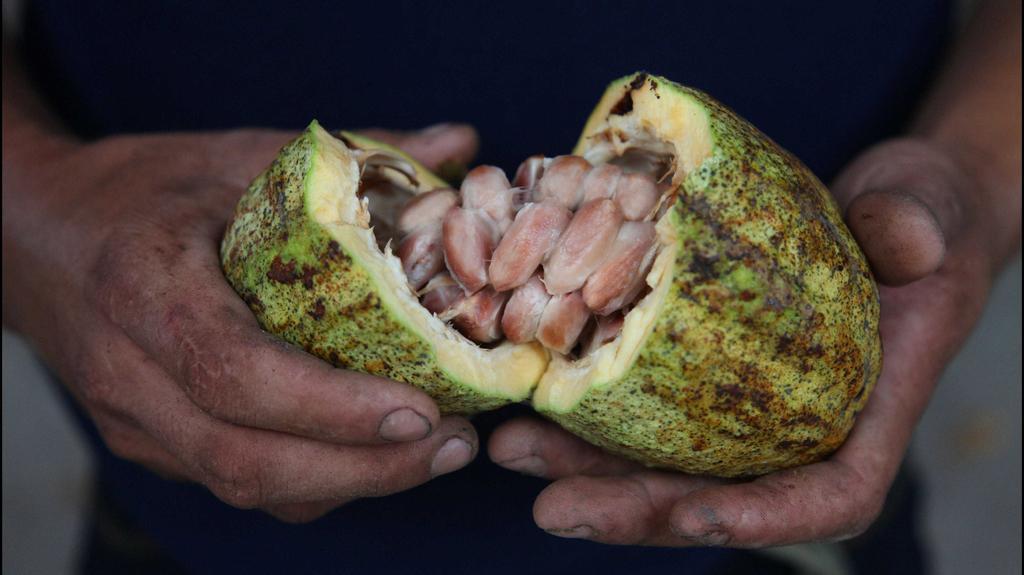 Kakaový bob