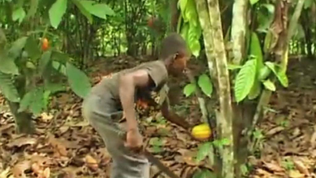 Dětská práce na kakaovníkových plantážích