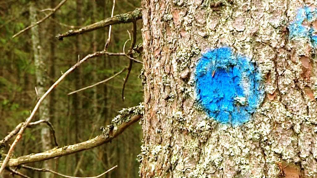 Označené stromy