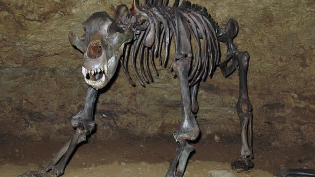 Pravěký jeskynní medvěd