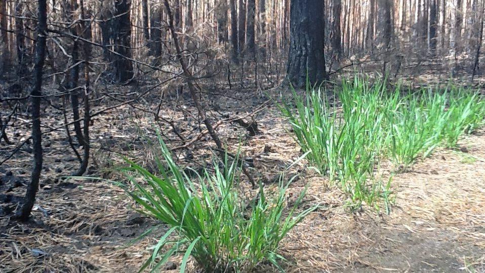 Tráva v lese znovu roste