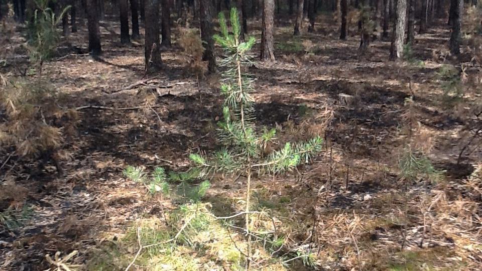 Kdy v lese převládne opět zelená?