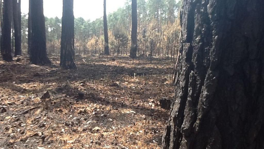 Ohořelé stromy po požáru u Bzence