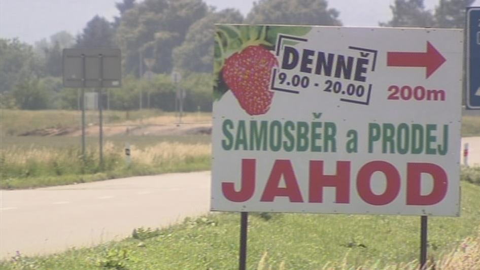 Samosběr ovoce je na Zlínsku populární