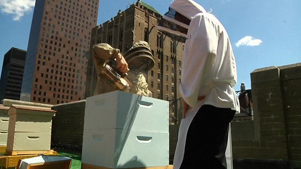 Včelaři na střeše hotelu