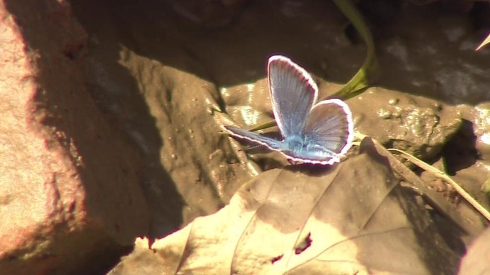 Motýli jsou u Ždánice vidět na každém kroku