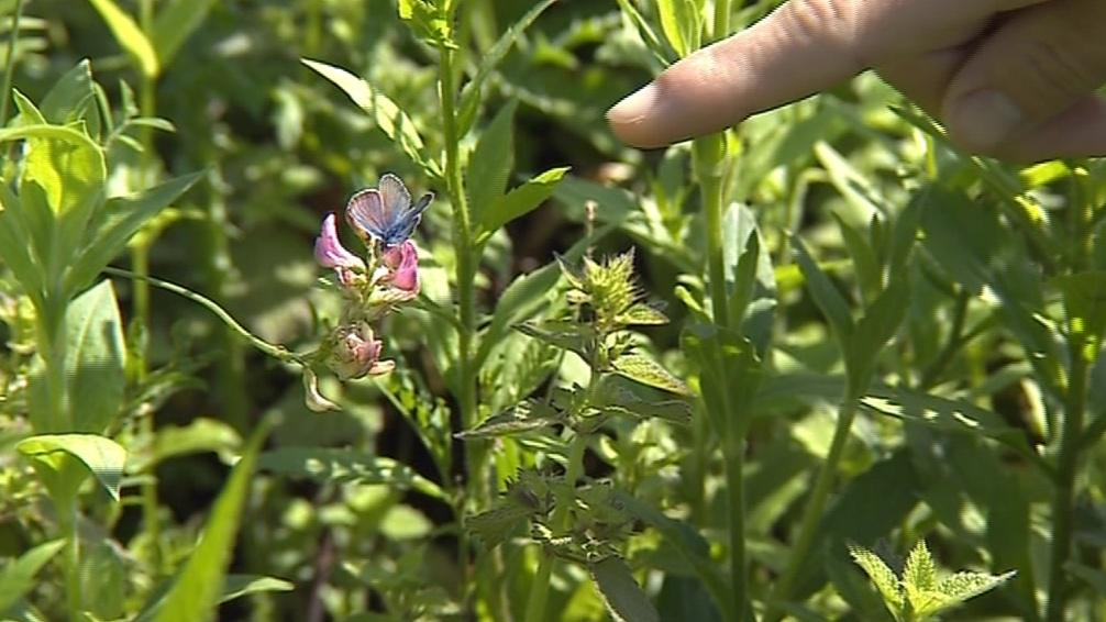 V oblasti poletuje více než osmdesát druhů motýlů různých barev a velikostí