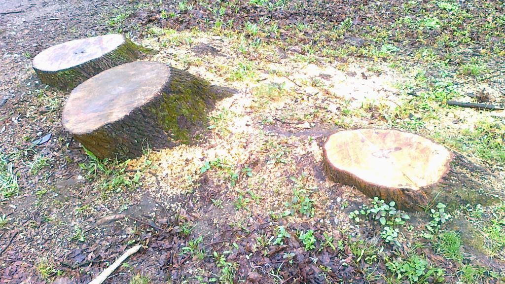 Po vzrostlých stromech zůstaly jen pařezy