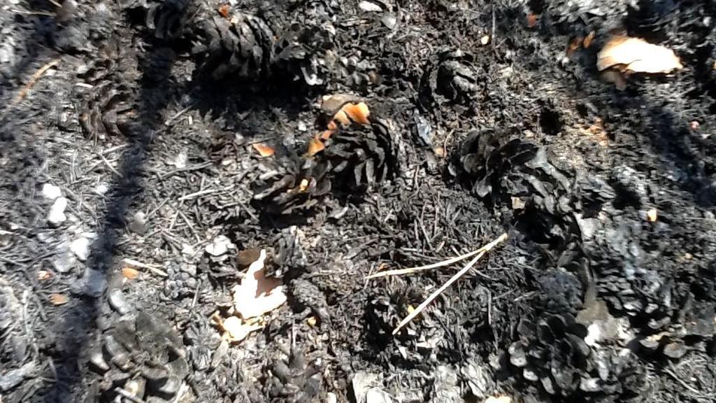 Spálená země po požáru u Bzence