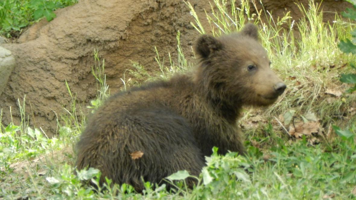 Medvídě