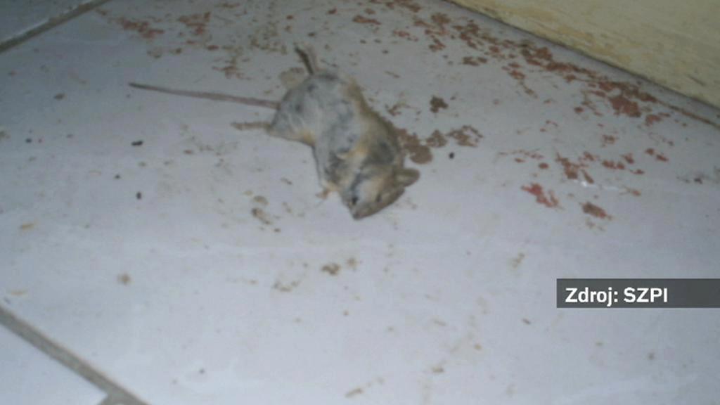 Mrtvá myš v prodejně potravin