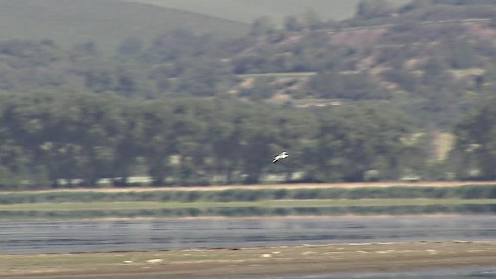 U Nesytu se objevili vzácní ptáci