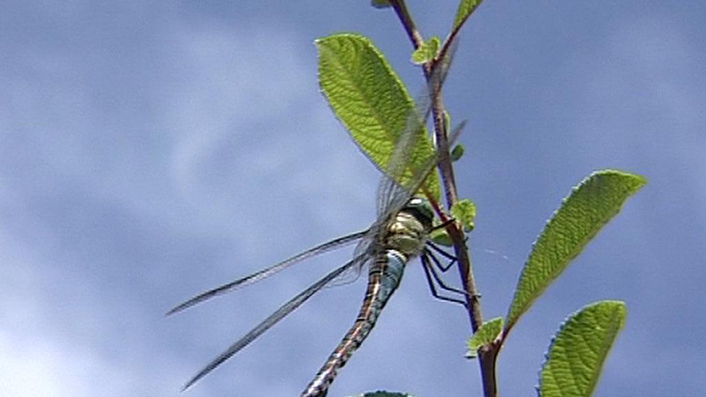 Vážka