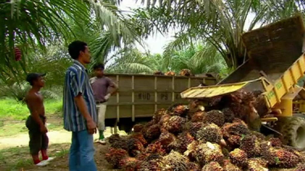 Produkce palmového oleje