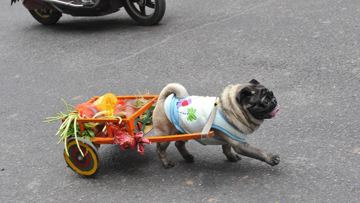 Nákupní vozík pro psa