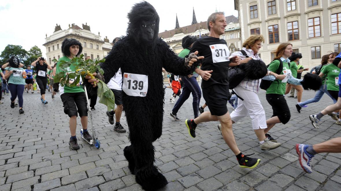 Běh pro gorily