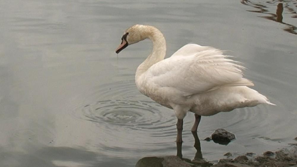 Kvůli sporu o rybník možná zvířata přijdou o domov