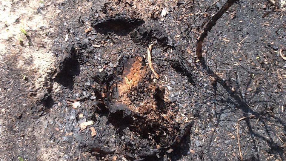Ze stromů zůstala po požáru jen malá vnitřní část