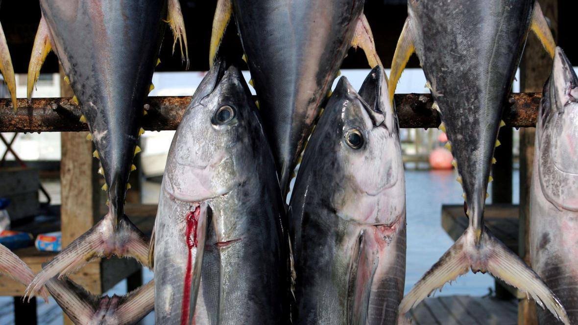 Tuňáci