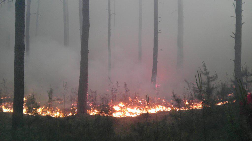 Požár v lese u Bzence