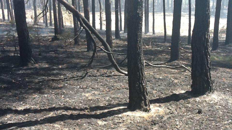 Zničený les po požáru u Bzence