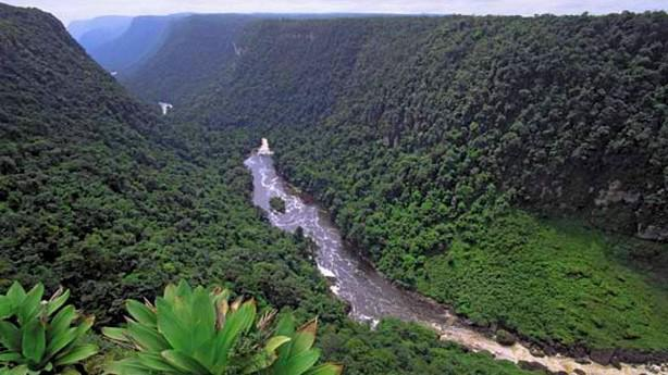 Ohrožené jihoamerické pralesy