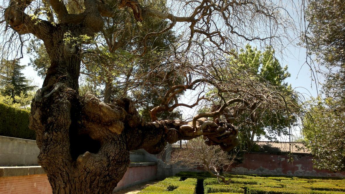 Zahrady zámku El Pardo
