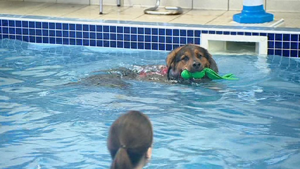 Psí hydroterapie
