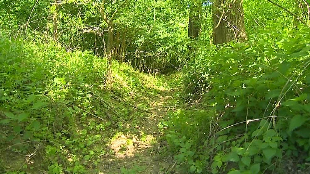 Zavodnění Kněžpolského lužního lesa