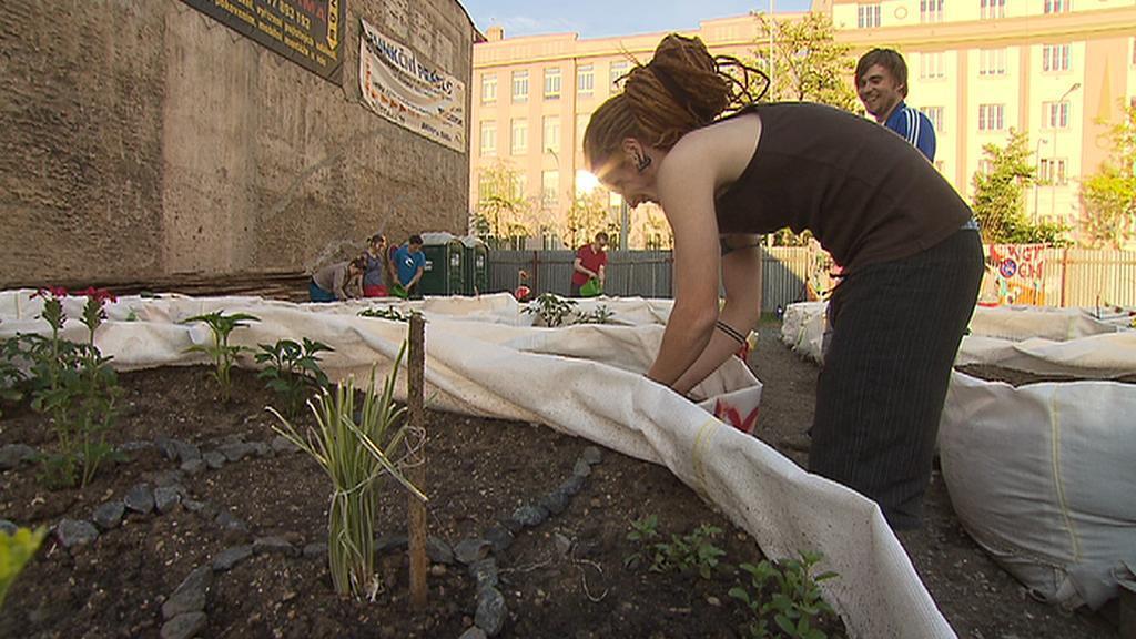 Komunitní zahradničení