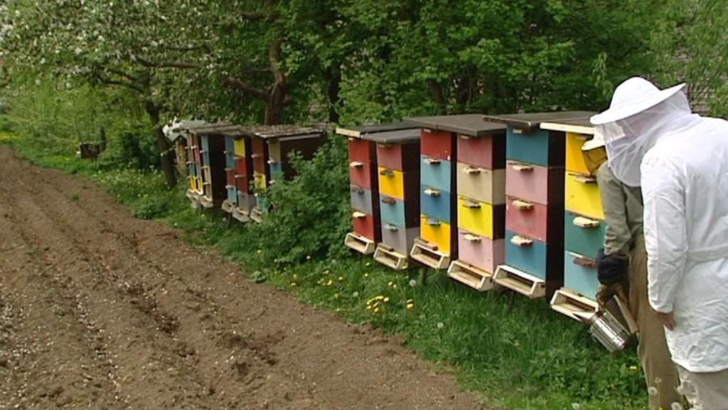 Včelaři kontrolují včely v úlech