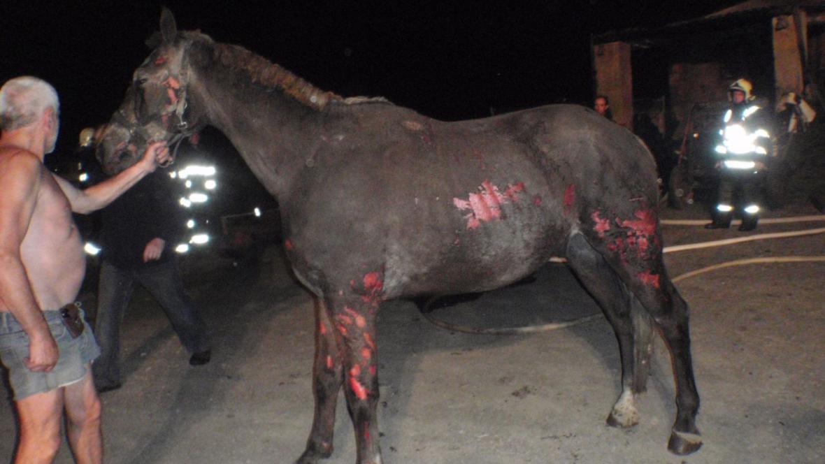 Popálené koně ošetřil veterinář