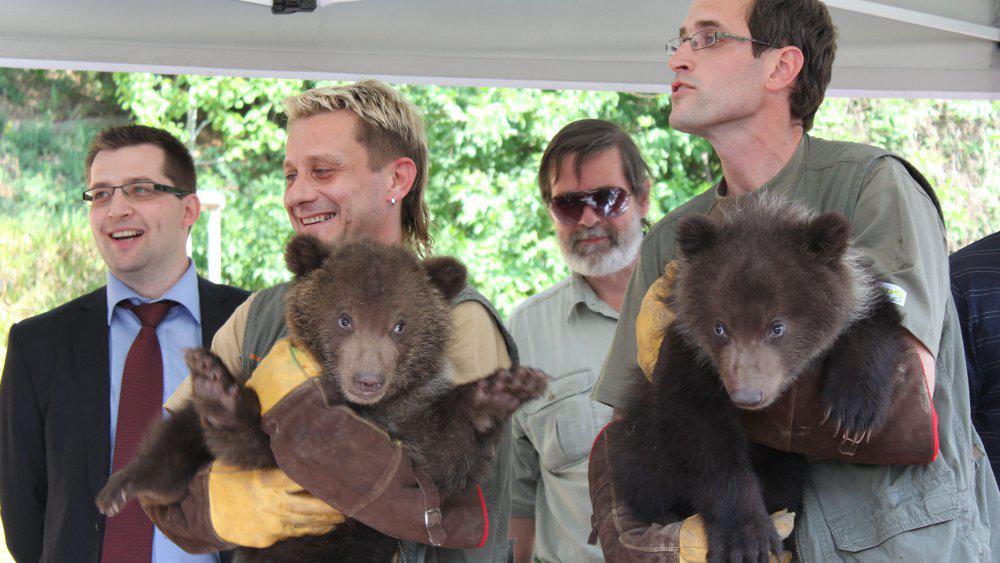 Medvědí dvojčata z brněnské zoo