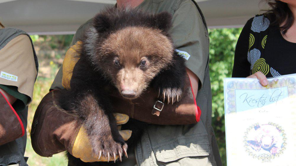 Medvídci dostali křestní list