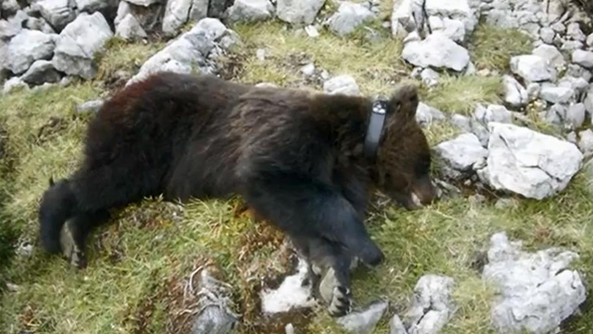 Medvěd M13
