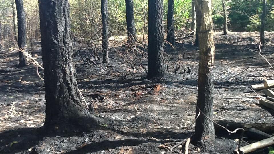 V lese zůstaly jen ohořelé kmeny