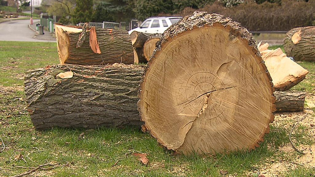 Pokácené stromy v Žebráku