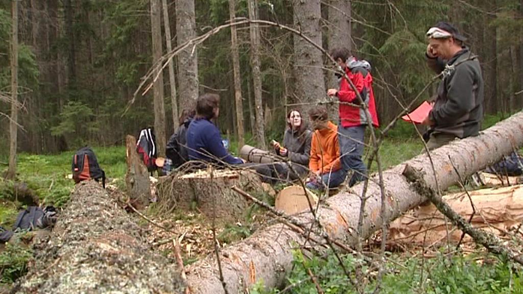 Ekologičtí aktivisté obsadili les