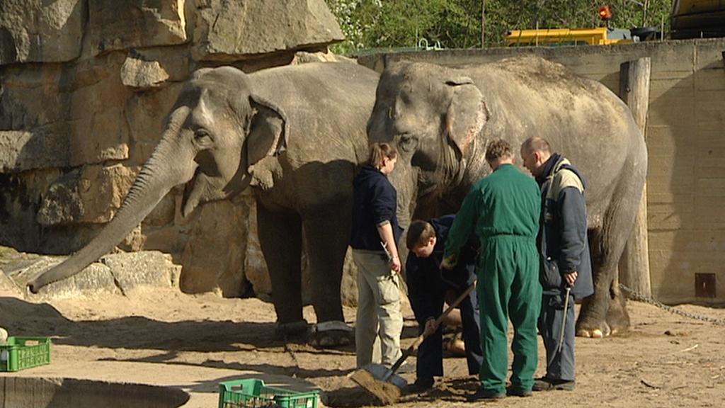 Stěhování slonů v pražské zoo