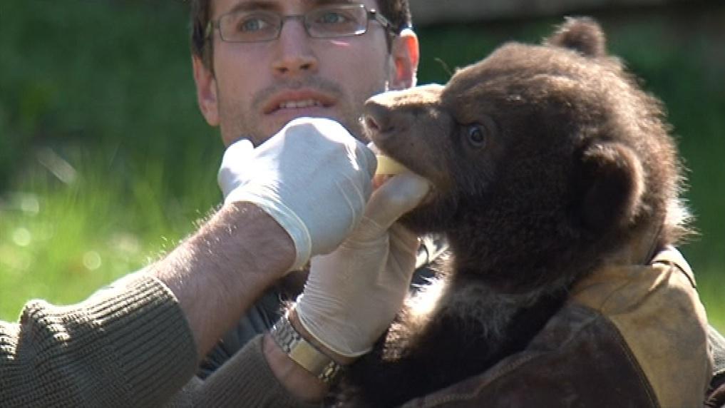 Medvíďata poprvé prohlédl veterinář