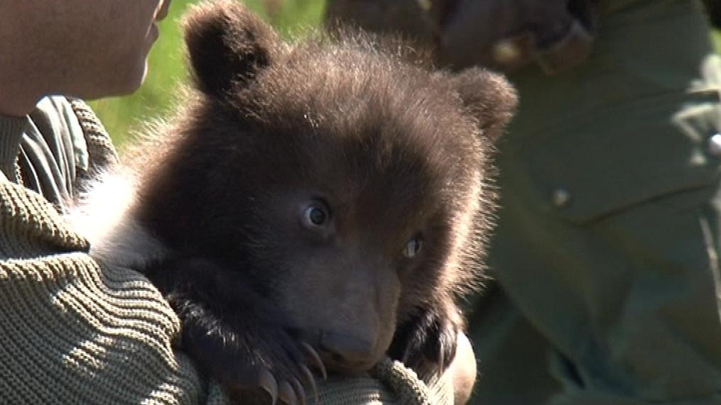 Medvídci mají necelé tři měsíce a váží kolem osmi kilo