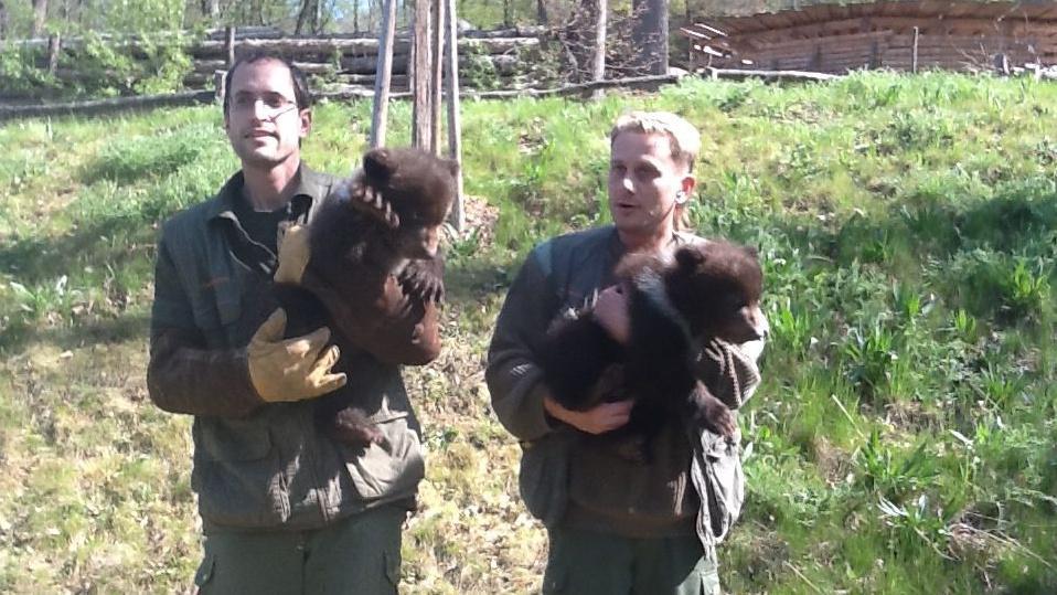 Medvíďata poprvé zavítala do výběhu