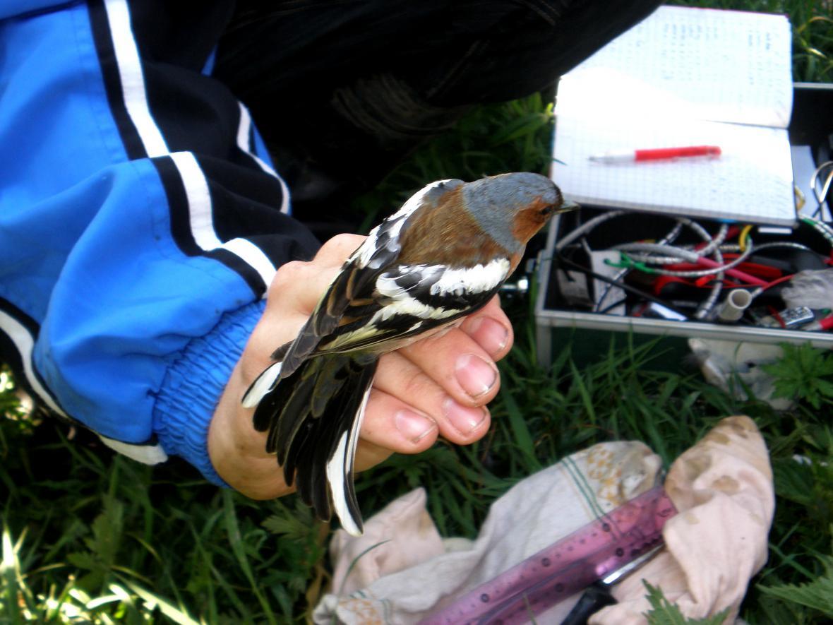 Vítání ptačího zpěvu v Košticích